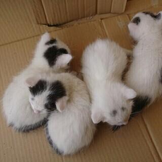 甘えん坊子猫4匹!