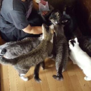 ネコ達のトイレ用の砂、紙砂、ペットシーツを援助していただけませんか?