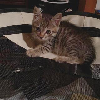 可愛い子猫のプリンちゃん♀