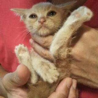 時間がありません、ひかれてしまいそうになっていた子猫 − 福島県
