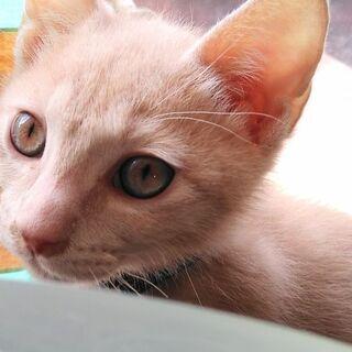 生後2ヶ月の雄子猫