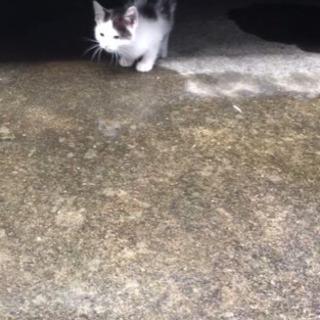 生後3ヶ月前後 子猫 の 里親募集しています - 猫