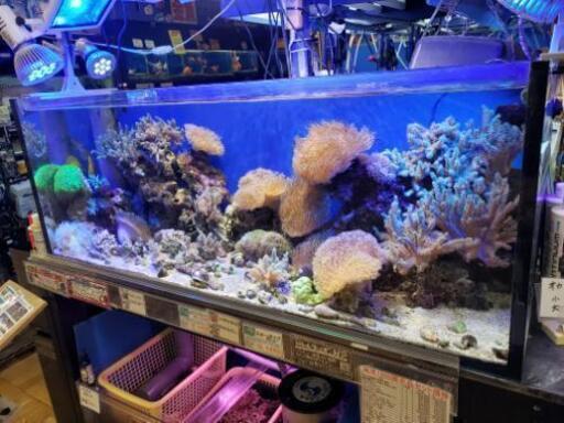 ショップ 熱帯魚 千葉県の大型アクアショップ