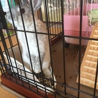 急募ウサギ  3月4日産まれ