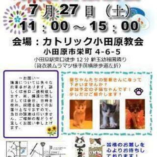 7月27日(土) 保護猫譲渡会  &  ミニバザー