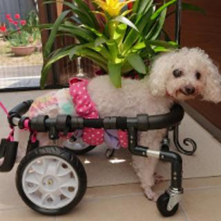 犬用車椅子 歩行器 製作販売
