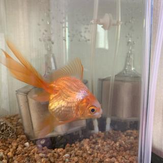 可愛らしい魚たちを育ててくれるかたいませんか?
