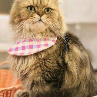 可愛い猫ちゃん達に囲まれて、お仕事しませんか?