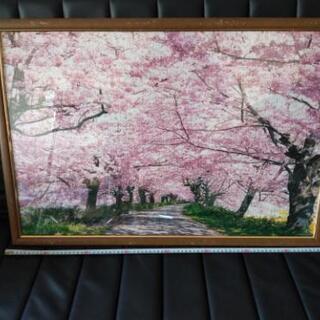 桜 パズル 額付き 80✕50cm