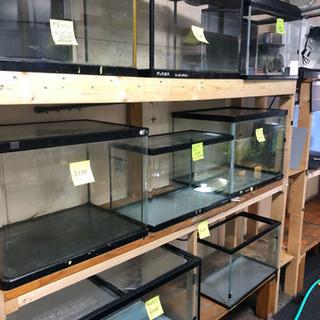 熱帯魚用品 生体