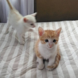 子猫の里親募集します