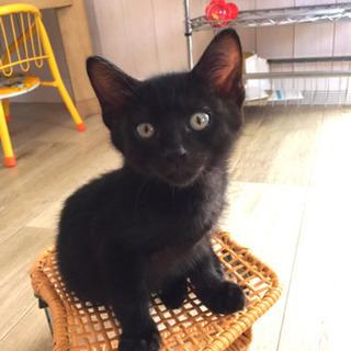 お膝乗り大好き♡性格バツグン黒猫兄弟!