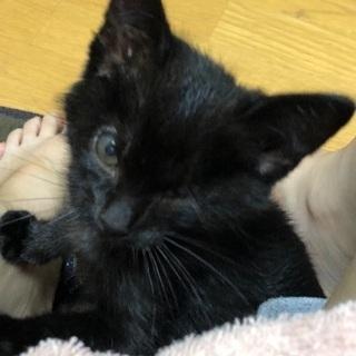 【里親募集】 生後約2ヶ月の黒猫♂