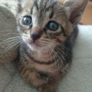 生後1カ月の子猫ちゃん