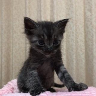 可愛いい子猫ちゃん♪