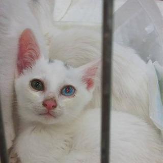 白猫兄弟2匹