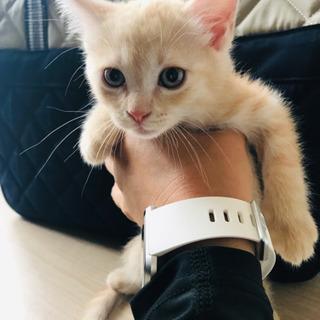 子猫3匹 生後1ヶ月半
