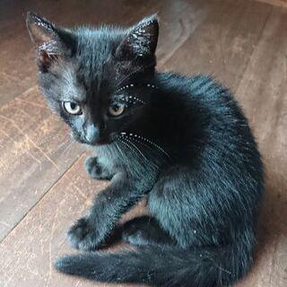 うちの黒猫ちゃん、里親になって下さい