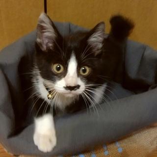 めちゃくちゃに可愛い甘えん坊の赤ちゃん猫!