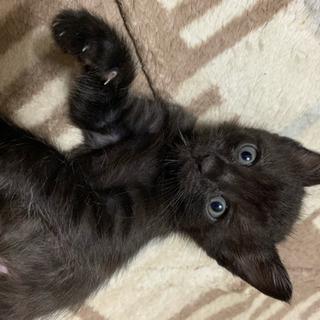 生後3週間くらいの子猫の里親募集