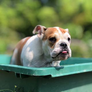 兵庫県丹波市に犬の総合施設オープン!