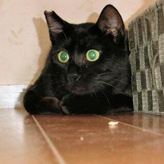黒猫の中の黒猫(笑)