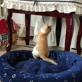 一旦募集停止中 3ヶ月半位の子猫 オス