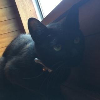人馴れした黒猫くん