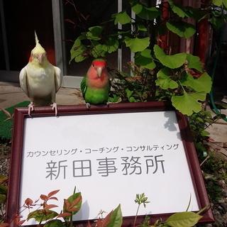 正式な僧侶による「易占カウンセリング」で開運!世界遺産比叡山で厳...