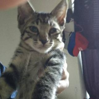 子猫生後2ヶ月半〜3ヶ月まだ決まってない猫ちゃん居ます!