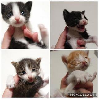 【相談中】捨て猫5匹