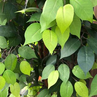 観葉植物の造花