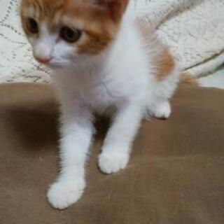 ★2カ月の子猫と推定2歳のママ猫ちゃん★
