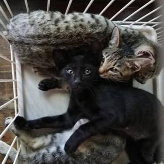 3ヶ月の仔猫の里親募集