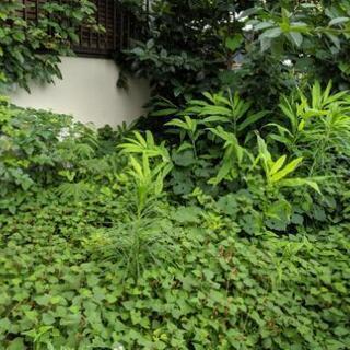 草むしり、草刈り、草焼き、除草剤散布、除草シート施工 − 東京都