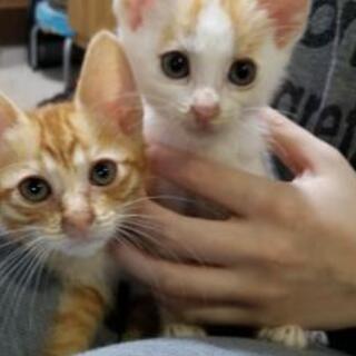 可愛い子猫を家族にして下さい