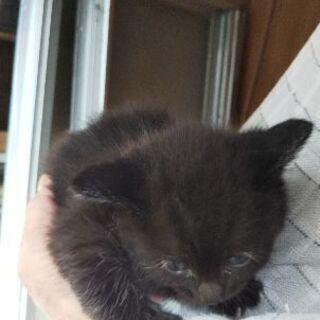 里親さん募集!母猫と3匹の子猫 - 猫