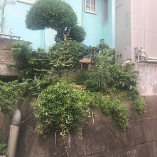 オシャレな坪庭を作りませんか(^-^)