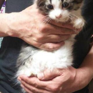 生後3ヶ月弱子猫