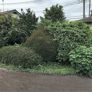 【さしあげます】庭の樹木