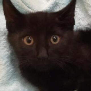 黒子猫2ヶ月半里親様決定😸