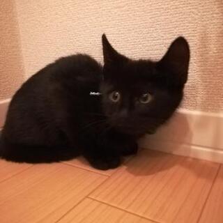 黒子猫2ヶ月半里親様決定😸 - 猫