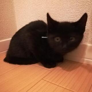 黒子猫2ヶ月半里親様決定😸 − 神奈川県