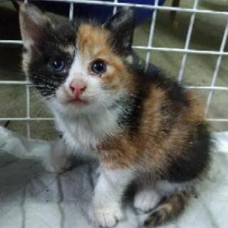 生後1ヶ月の子猫が4匹居ます。