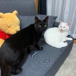 代理投稿:1歳/黒猫、男の子