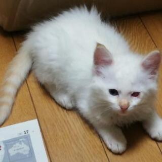 母猫とはぐれ独りで居る所を保護した子猫