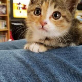 子猫の里親募集しています。