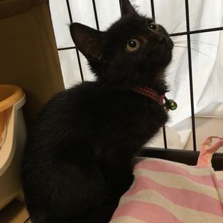 スリスリ、ゴロゴロな黒猫クー子ちゃん