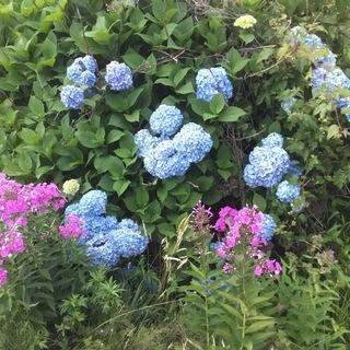 このお花の木をあげます