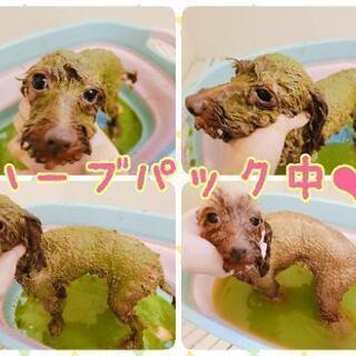 トリミングモデル犬募集!炭酸泉やハーブパックもあります! − 神奈川県